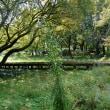 タカアザミ - 野川公園