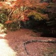2016 晩秋の道保川公園の紅葉