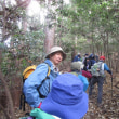 ⑯ 水越山~490mピーク登山 : 稜線を行く   UP4日目