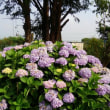 家の周りの花たち(夏編)