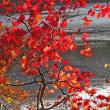 11月5日  湖の紅葉