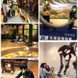 北海道博物館に行ってきました!ପ(⑅ˊᵕˋ⑅)ଓ
