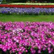 清水公園花ファンタジア