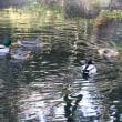 初春の徳川園