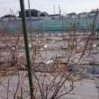 続ブルーベリー畑