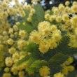 百合が原公園(札幌市北区)花盛り