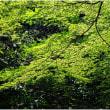 新緑を求めて(その3)