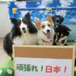 6/17&6/18の【ALOHA塾】報告~♪  犬のしつけ教室@アロハドギー