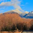 本日の八ヶ岳 【今冬一番の白さ】