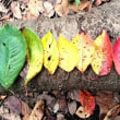 落ち葉のグラデーション