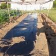 西瓜を植えます