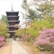 京都の極み 2018 春