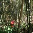 竹藪間伐 自然との力比べ(3月3日)