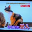 9/24 シムラ   野良ネコの名前はミーちゃん