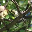 シジュウガラの幼鳥、イワツバメ、コゲラ