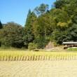 【稲の収穫日】
