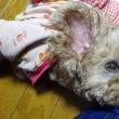 膝枕が大好きなキキちゃんです( ◠‿◠ )
