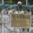 トロピカル・フラワ-ショ-