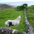アイルランドの旅