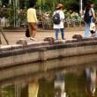 初夏イロ公園