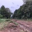 つくば市下総広域農道「アグリロード」の整備が進められています。