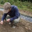 畝を掘り下げて冬菜の種まき