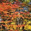 「今日の武蔵野の黄葉」