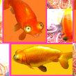 ★金魚!★