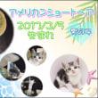 New Cat ฅ(=^・ω・^=) ฅ