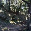 2017/12 鎌倉散策 4.明月院から鎌倉アルプスへ