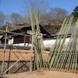 修二会本行前の二月堂には籠松明の青竹が