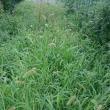 草をもって草を制す。