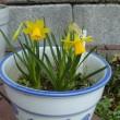 キズイセン:春