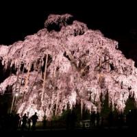 三春の滝桜ライトアップ