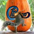 squirrel(chicago)