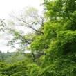 新緑に輝く♪~蓮華寺池公園~
