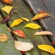 いつもの散歩道にも秋が来ました