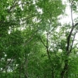 北上市国見山(6/22、ここの木は大丈夫か)