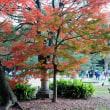 六義園紅葉・・2