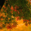雄日ヶ丘公園の紅葉