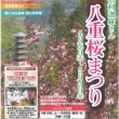 倶利迦羅さん 八重桜まつり 開催