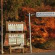 第29回「大野ダム公園もみじ祭り」開催中!!