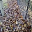 庭に舞い落ちた枯れ葉掃除