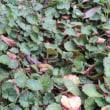 落ち葉とバラと緑・・・どれも素敵だ!