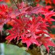 正歴寺の紅葉  11月11日