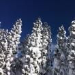 ハーフ大会後のジョグとスキー旅行
