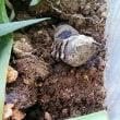 芋虫の成長