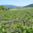 塩尻峠と諏訪湖一周歩き