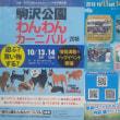 駒沢公園わんわんカーニバル2018【駒沢公園】