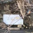 石神井公園・三宝寺池(石神井城址)とカワセミ